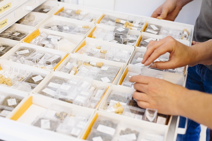 An open drawer with containers that hold the fossilized remains of small animals.